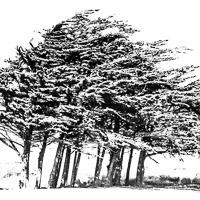 Logynn B. Ferrall